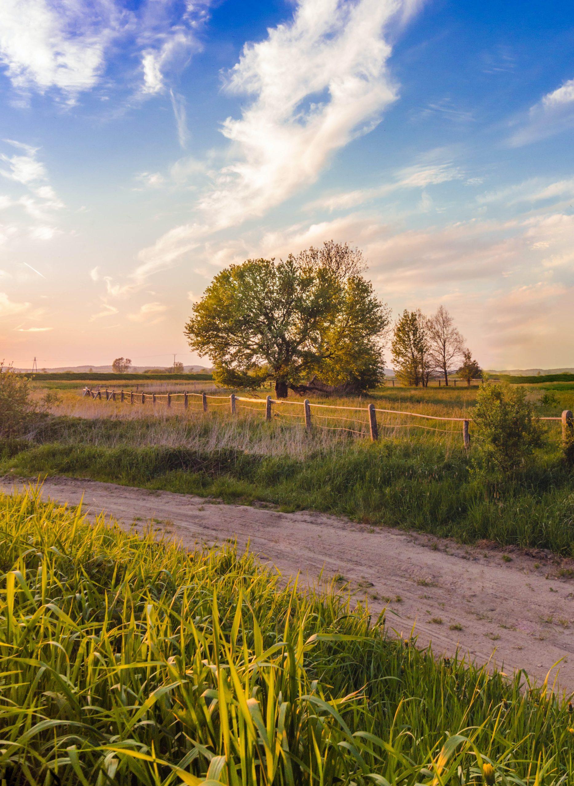 rural ontario real estate